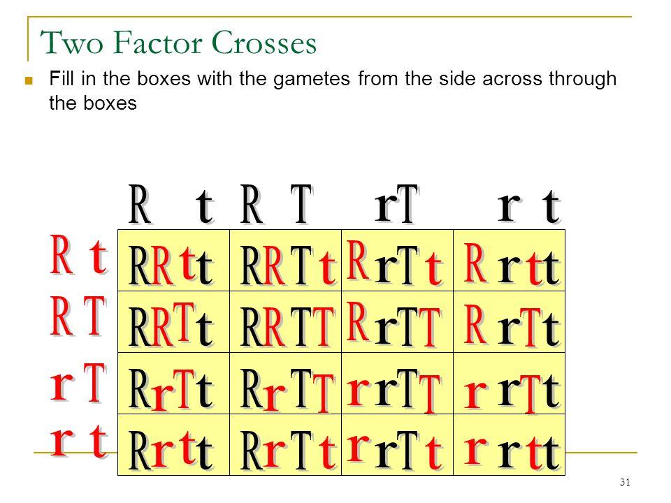 Two Factor Crosses R r t T R r T t R r R r t T R r T t R r R r T t T t