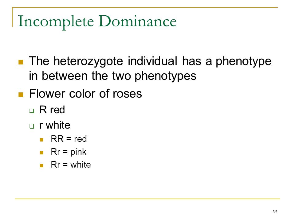 Incomplete Dominance The heterozygote individual has a phenotype in between the two phenotypes. Flower color of roses.