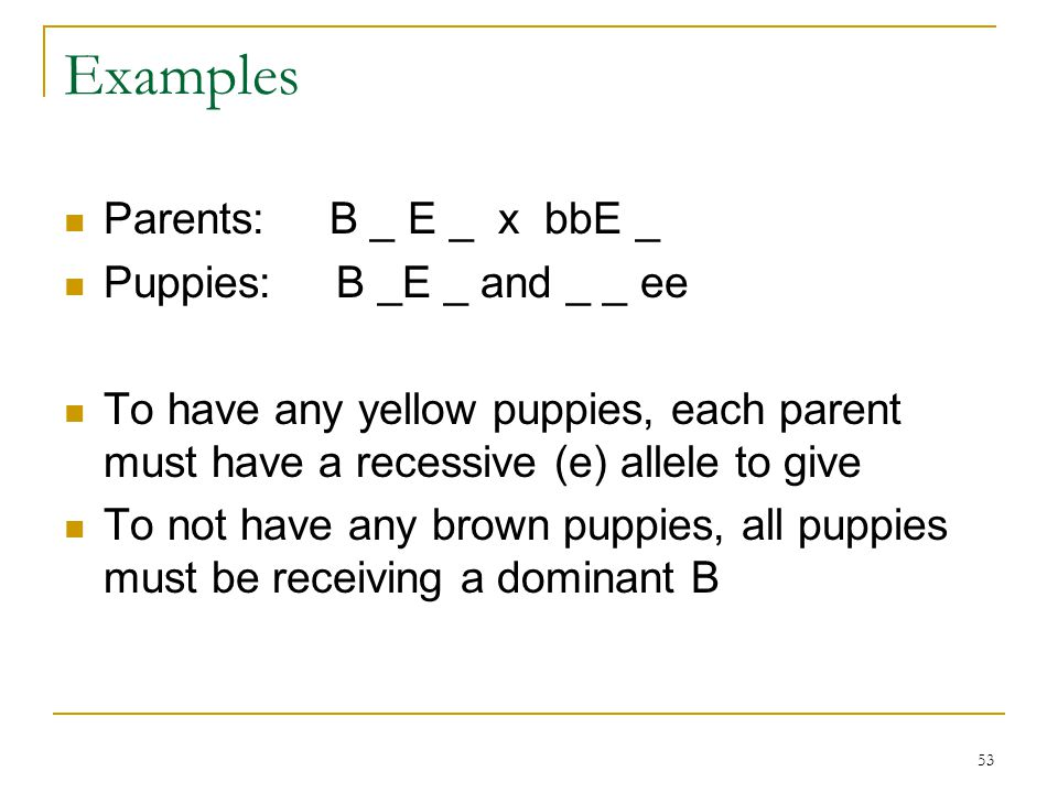Examples Parents: B _ E _ x bbE _ Puppies: B _E _ and _ _ ee