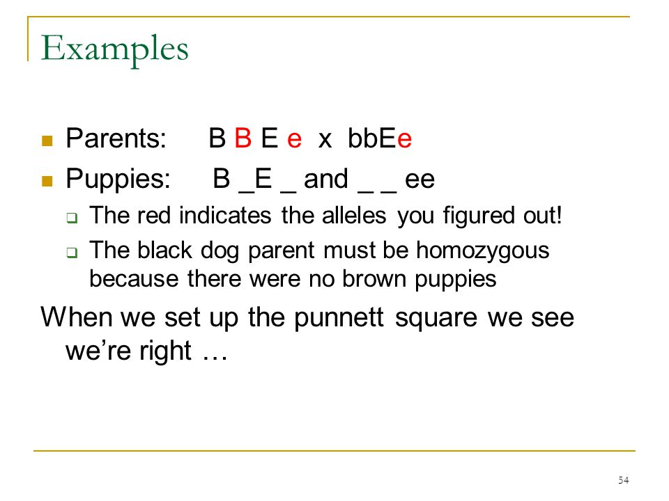 Examples Parents: B B E e x bbEe Puppies: B _E _ and _ _ ee