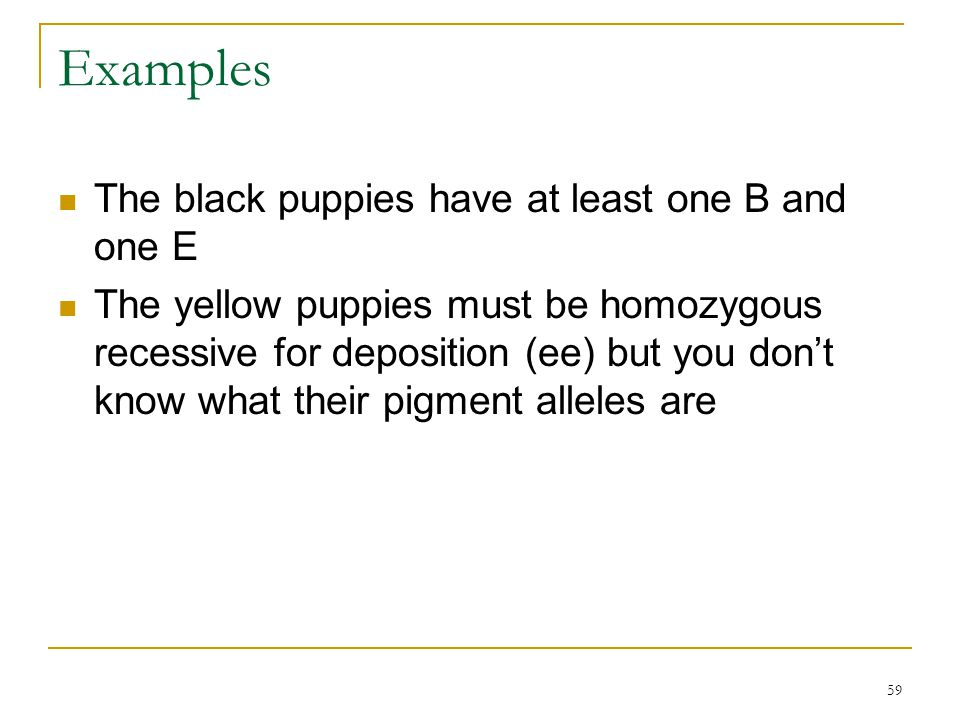 Examples The black puppies have at least one B and one E