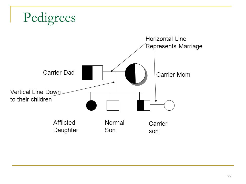 Pedigrees Horizontal Line Represents Marriage Carrier Dad Carrier Mom