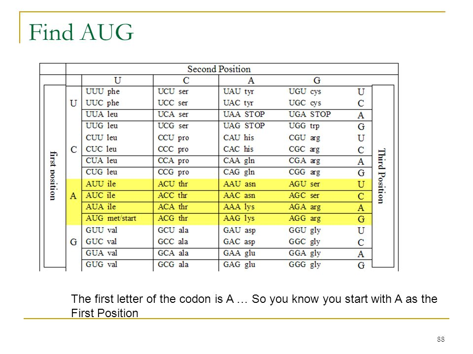 Find AUG The first letter of the codon is A … So you know you start with A as the First Position