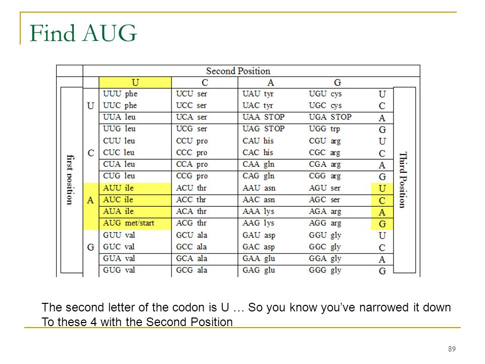 Find AUG The second letter of the codon is U … So you know you've narrowed it down.