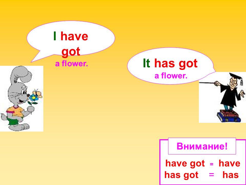 I have got It has got Внимание! have got = have has got = has