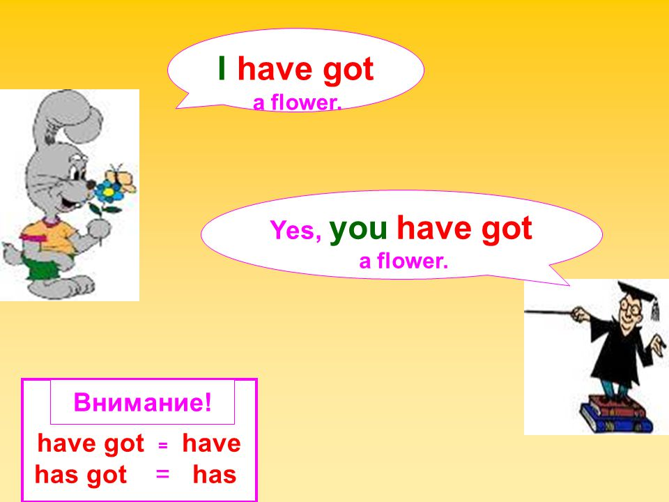 I have got Yes, you have got Внимание! have got = have has got = has