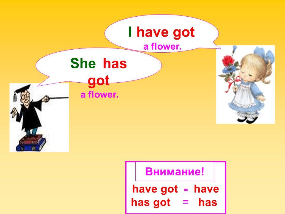 I have got She has got Внимание! have got = have has got = has