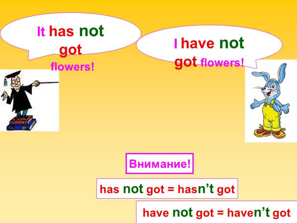 have not got = haven't got