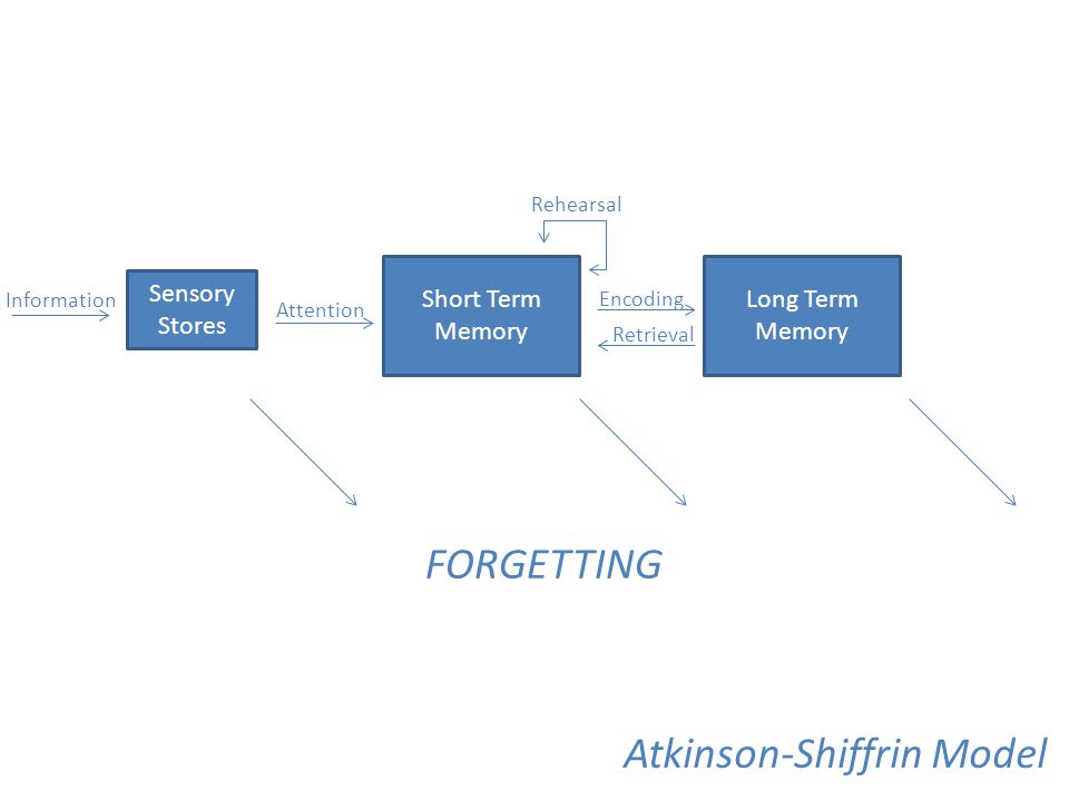 Atkinson-Shiffrin Model