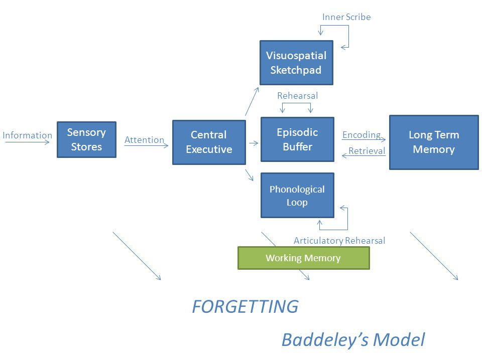 FORGETTING Baddeley's Model Visuospatial Sketchpad Central Executive
