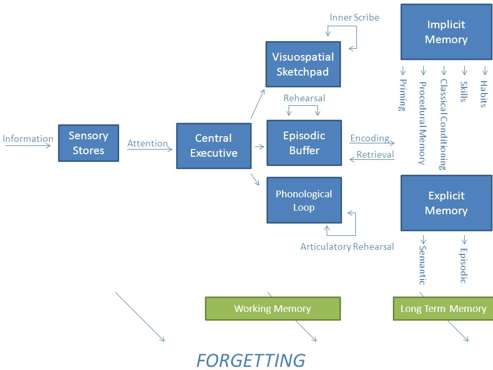 FORGETTING Implicit Memory Visuospatial Sketchpad Episodic Buffer