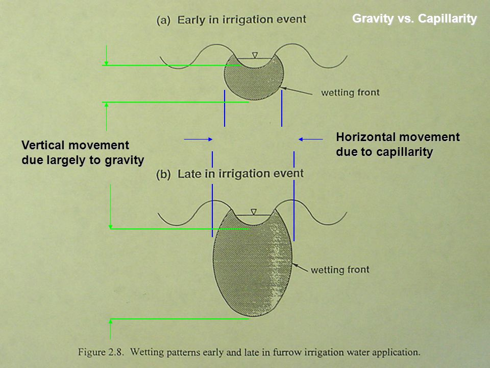Gravity vs. Capillarity