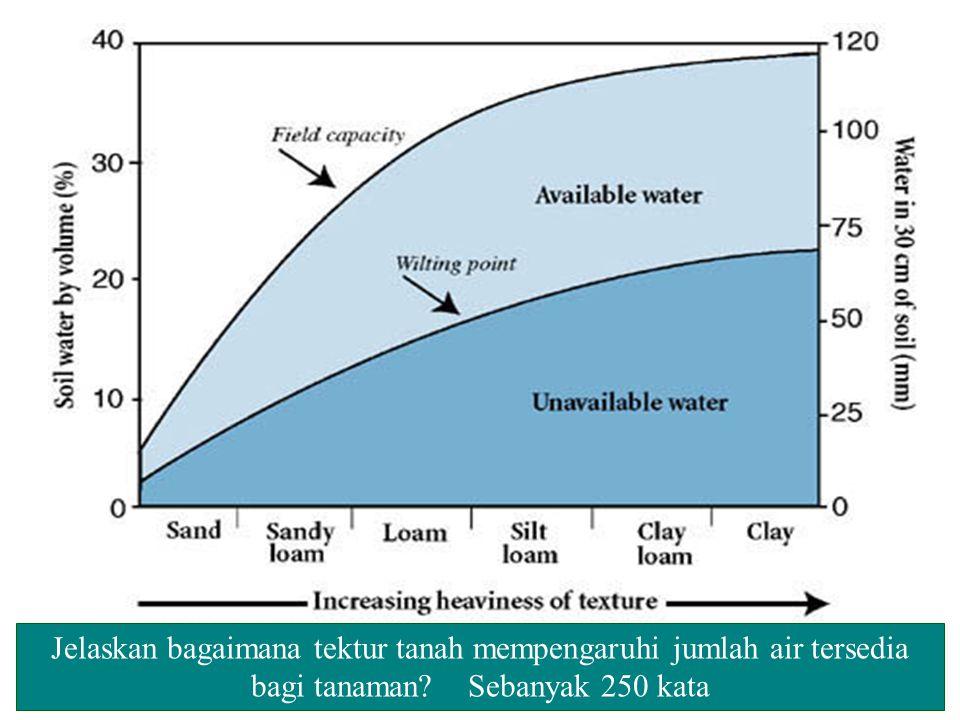 Jelaskan bagaimana tektur tanah mempengaruhi jumlah air tersedia bagi tanaman Sebanyak 250 kata