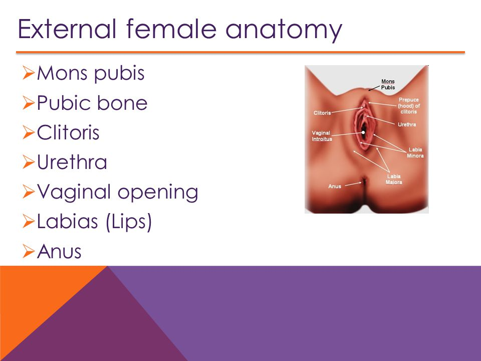 External female anatomy