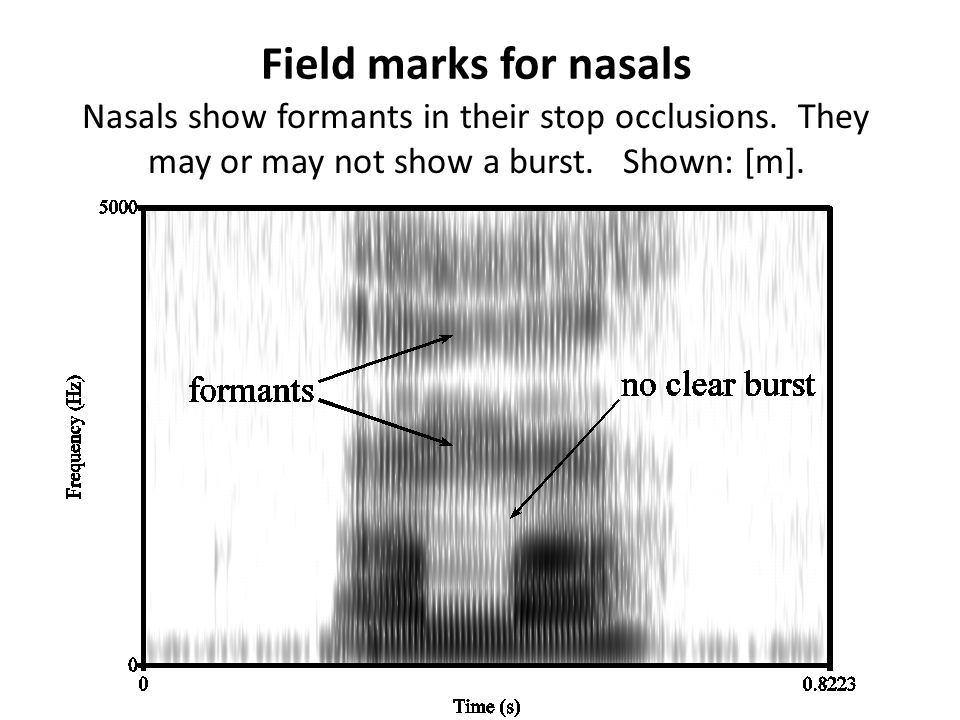 Field marks for nasals Nasals show formants in their stop occlusions.