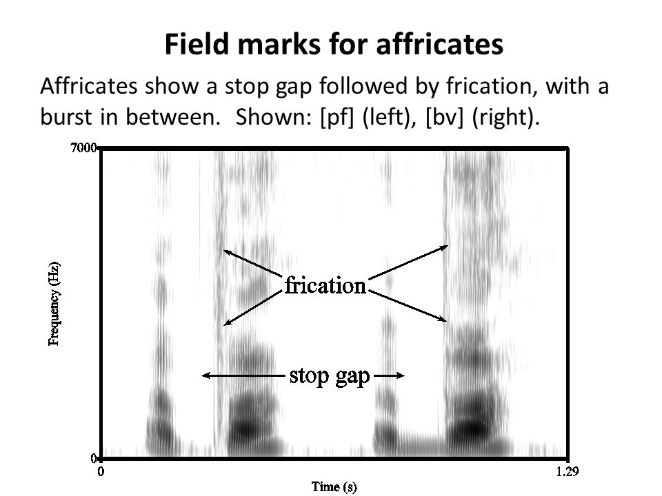 Field marks for affricates