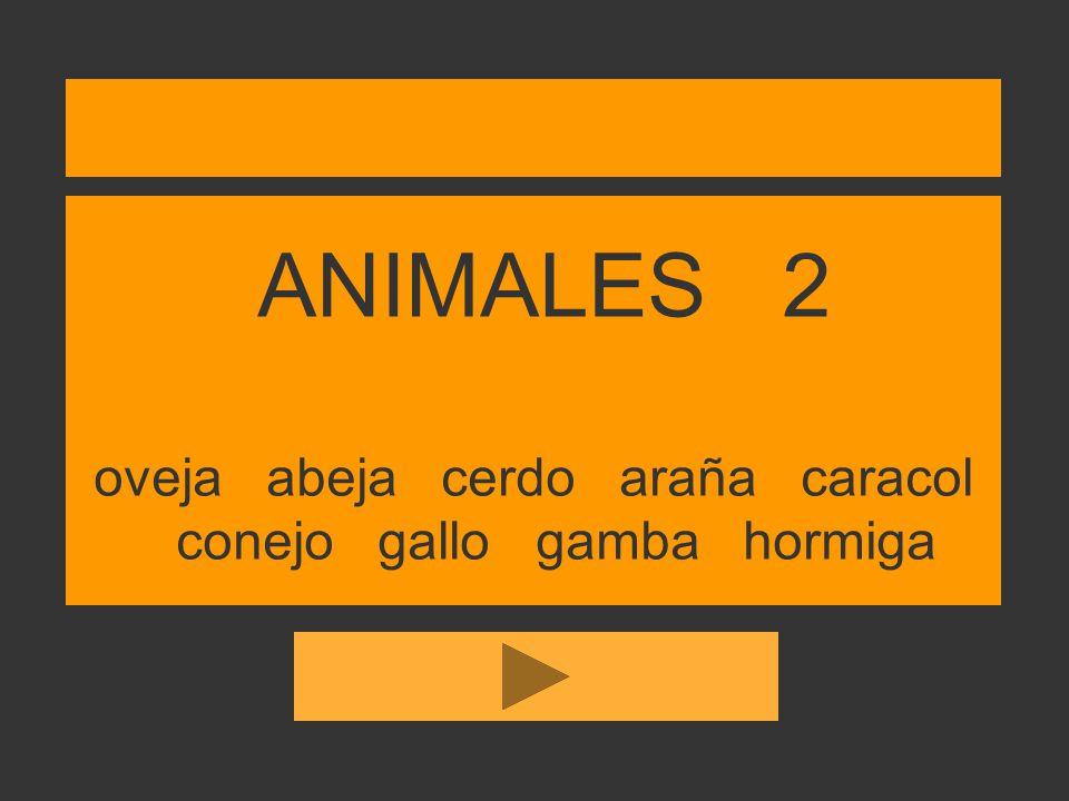 ANIMALES 2 oveja abeja cerdo araña caracol conejo gallo gamba hormiga