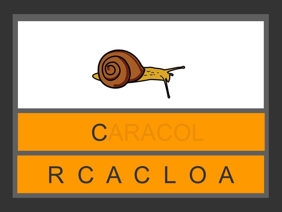CARACOL R C A C L O A