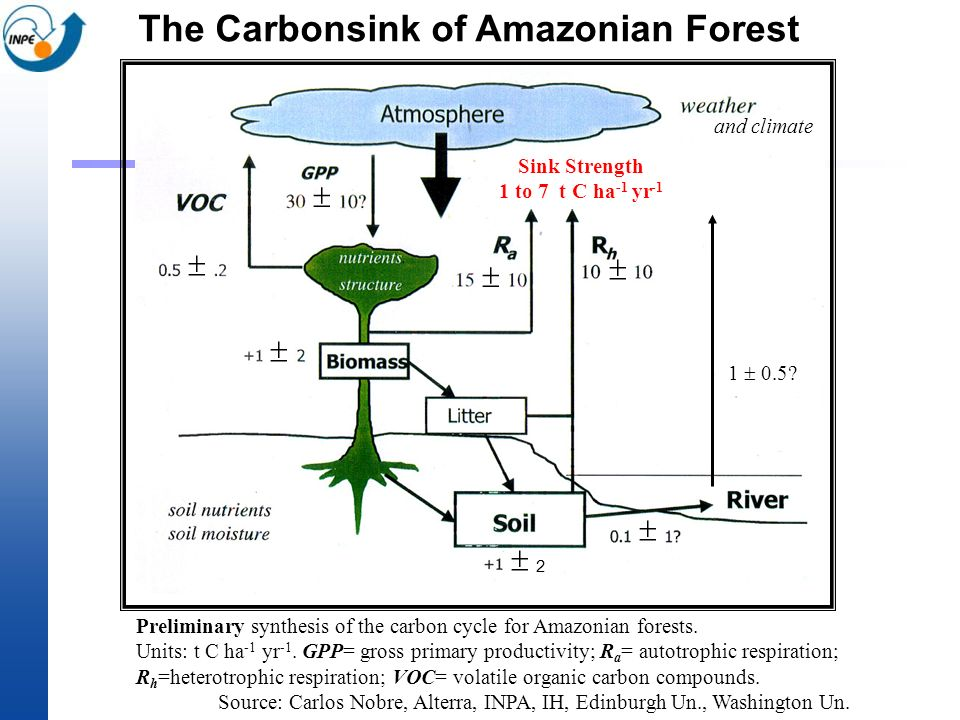 The Carbonsink of Amazonian Forest