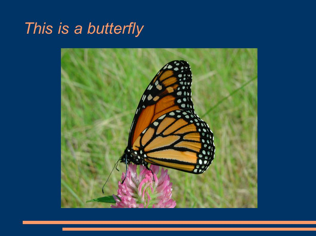 This is a butterfly