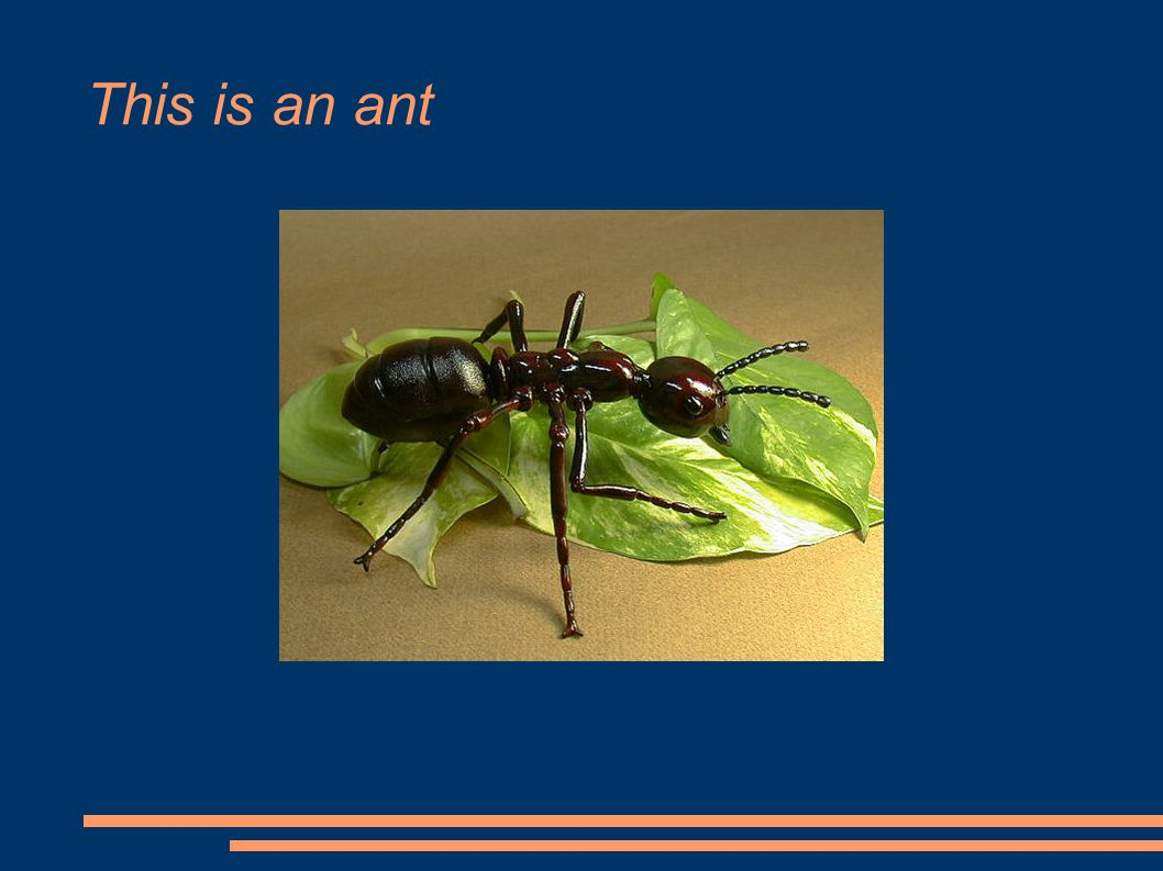 This is an ant