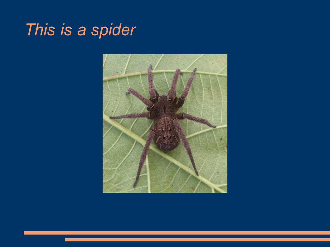 This is a spider