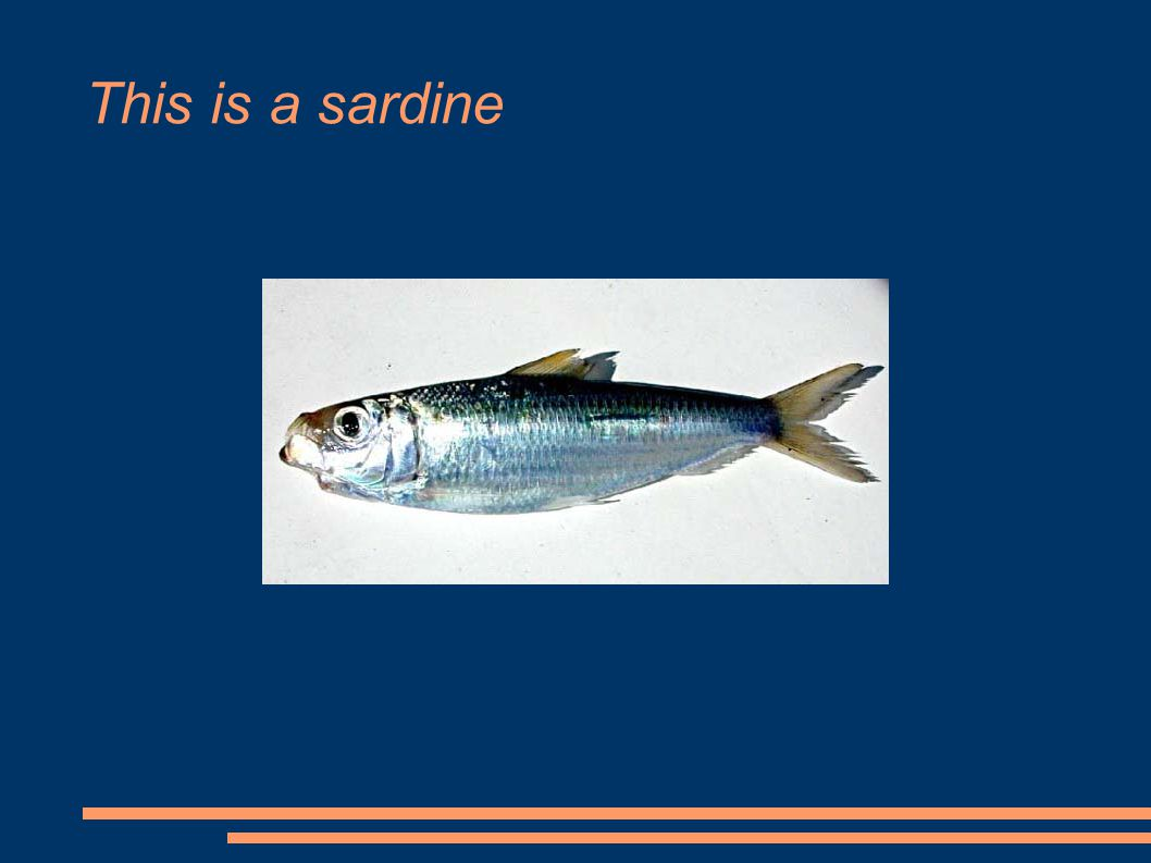 This is a sardine