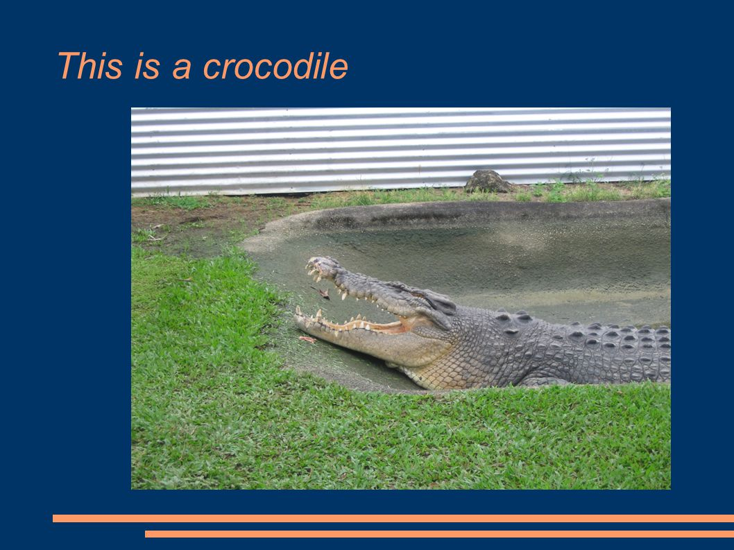 This is a crocodile