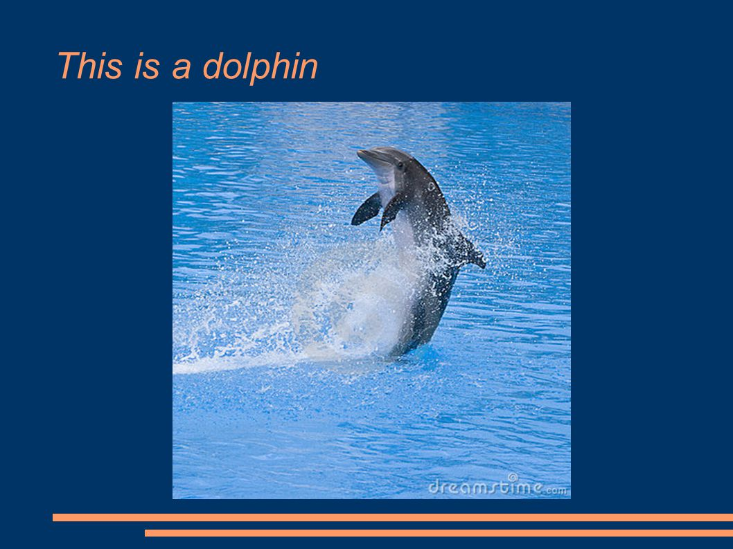 This is a dolphin