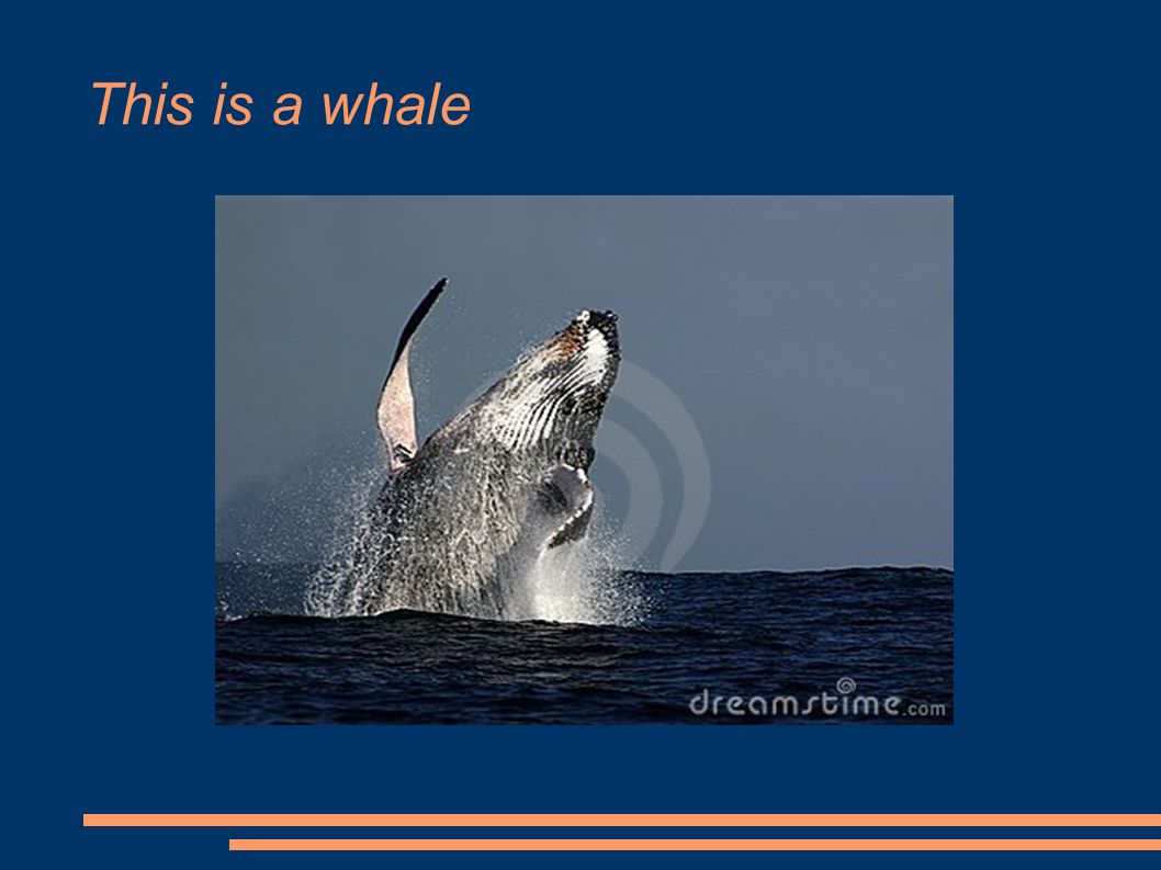 This is a whale