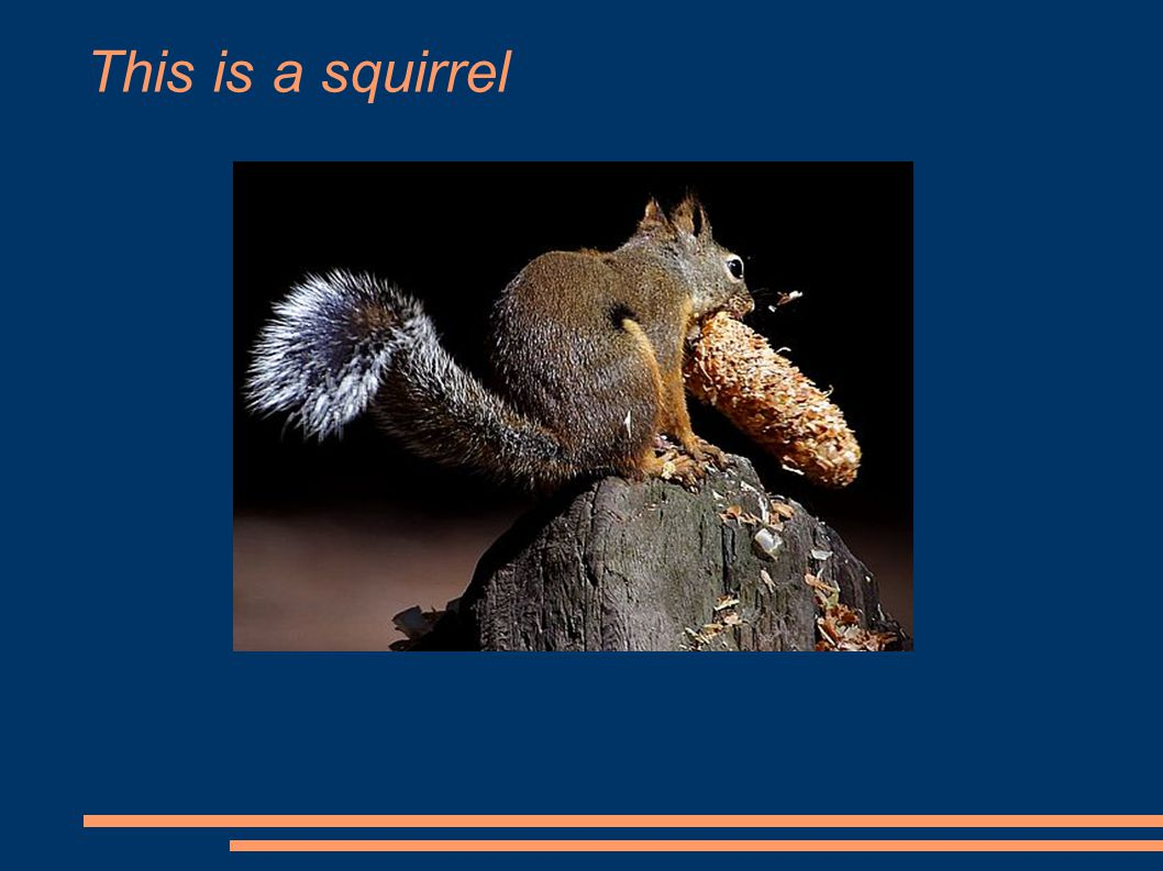 This is a squirrel