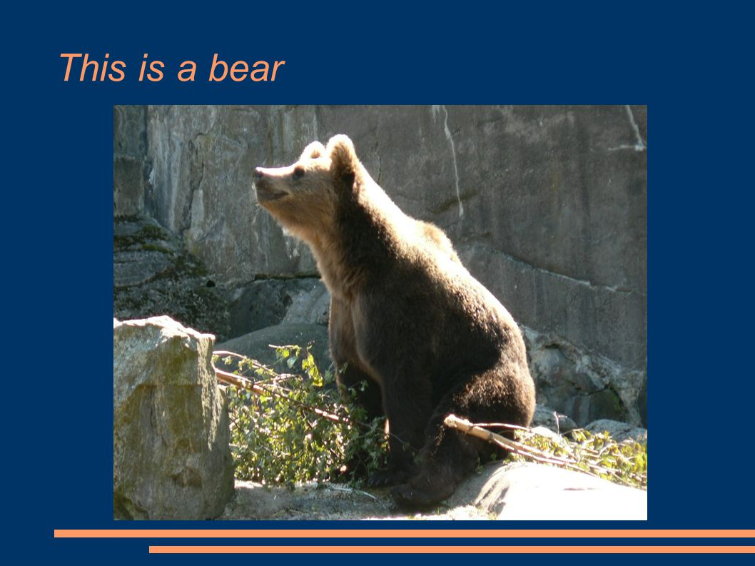 This is a bear