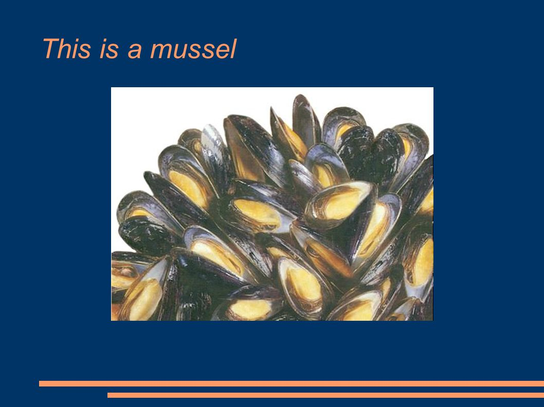 This is a mussel