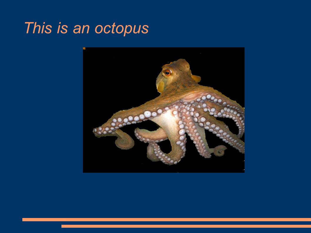 This is an octopus