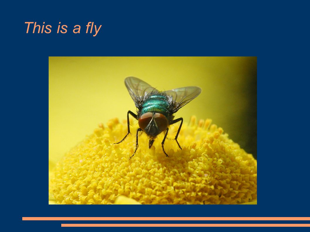 This is a fly