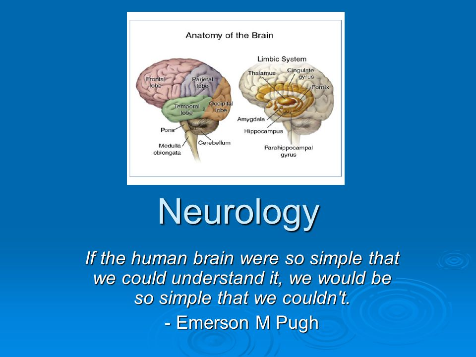 Neurology If the human brain were so simple that we could understand it, we would be so simple that we couldn t.