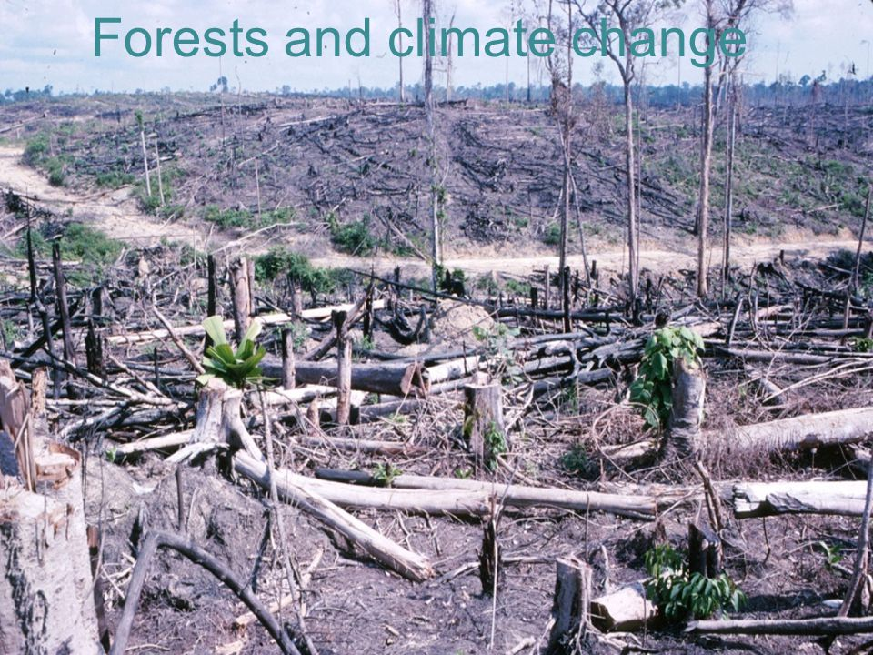 Forests and global warming