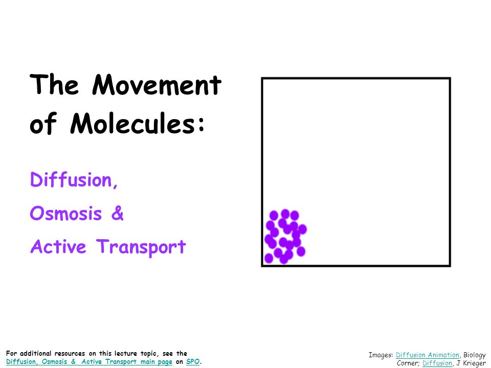 The Difference Between Osmosis and Active Transport