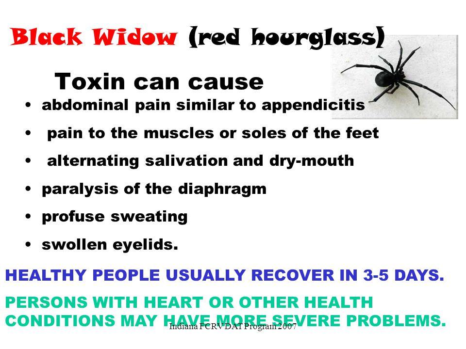 Black Widow (red hourglass)