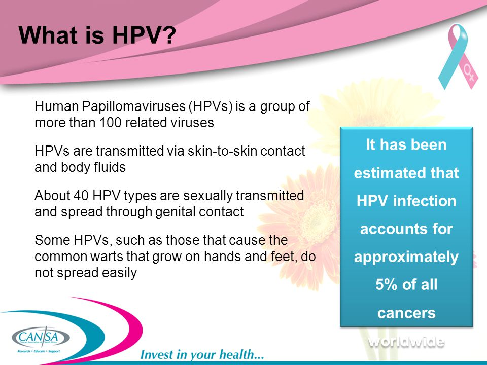 What is HPV Human Papillomaviruses (HPVs) is a group of more than 100 related viruses.