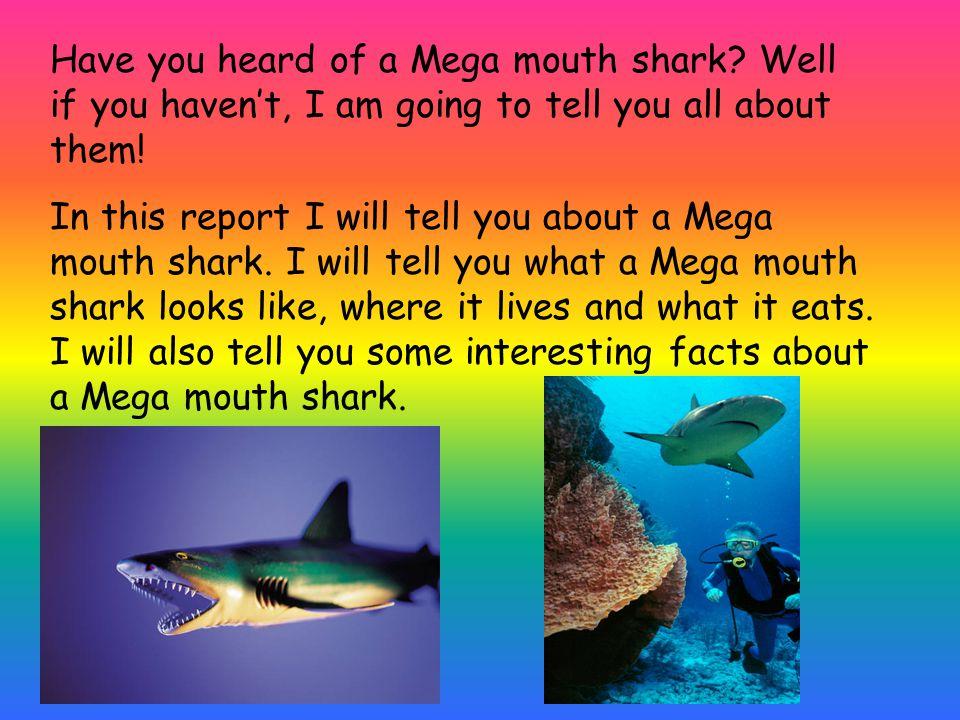 Have you heard of a Mega mouth shark