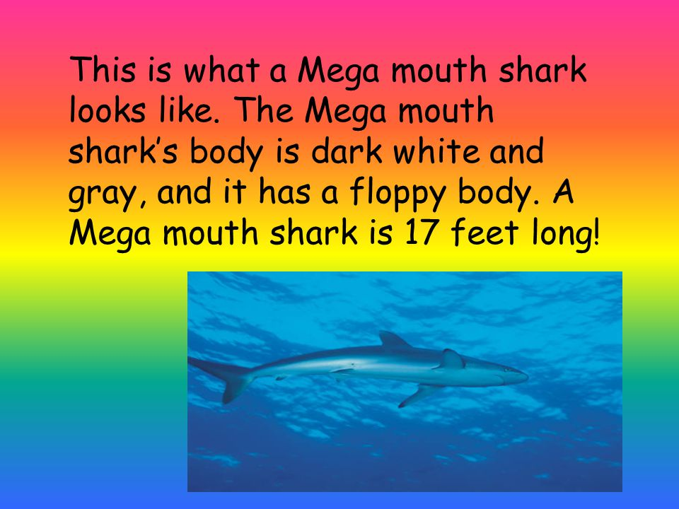 This is what a Mega mouth shark looks like