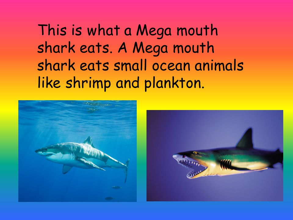 This is what a Mega mouth shark eats