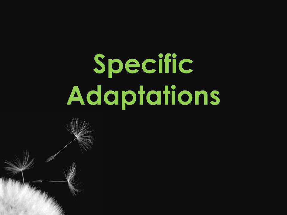 Specific Adaptations Casey