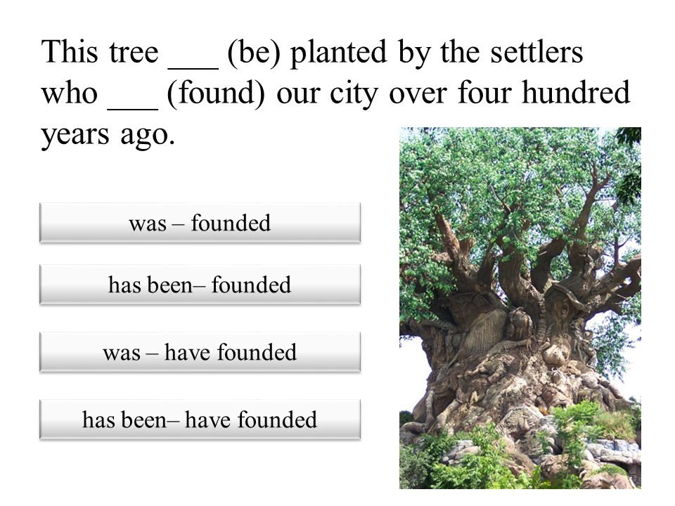 This tree ___ (be) planted by the settlers who ___ (found) our city over four hundred years ago.