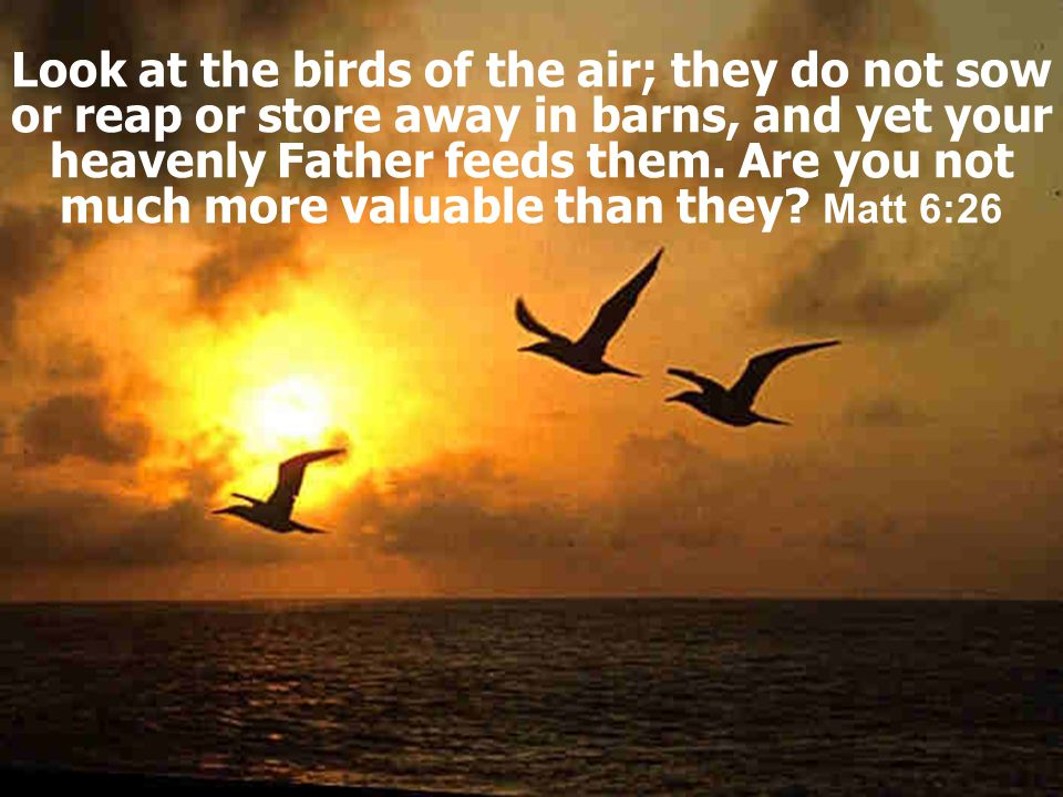 Look at the birds of the air; they do not sow or reap or store away in barns, and yet your heavenly Father feeds them.