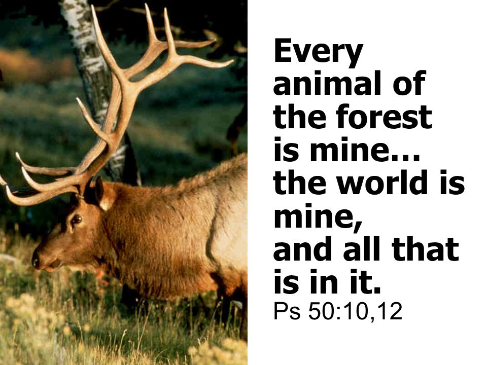 Every animal of the forest is mine… the world is mine, and all that is in it. Ps 50:10,12