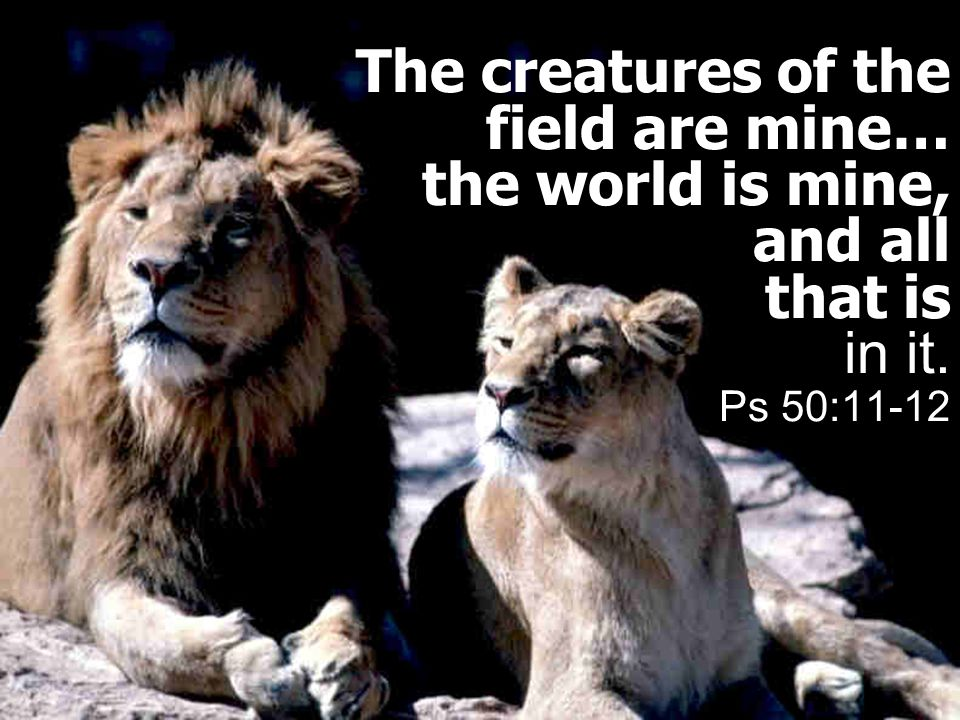 The creatures of the field are mine… the world is mine, and all that is in it. Ps 50:11-12