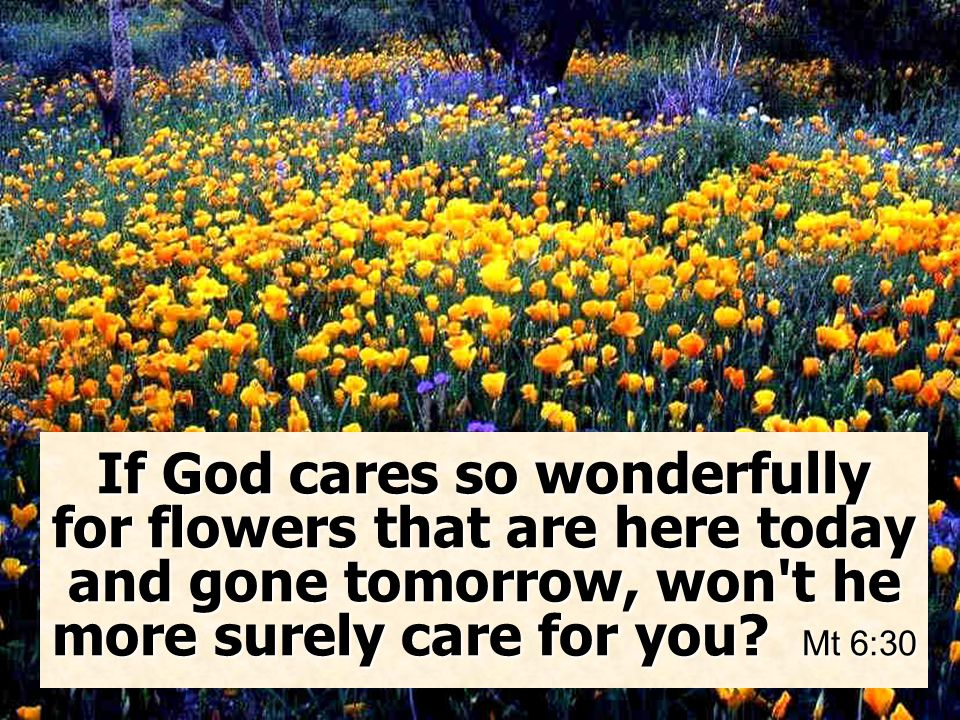 If God cares so wonderfully for flowers that are here today and gone tomorrow, won t he more surely care for you.