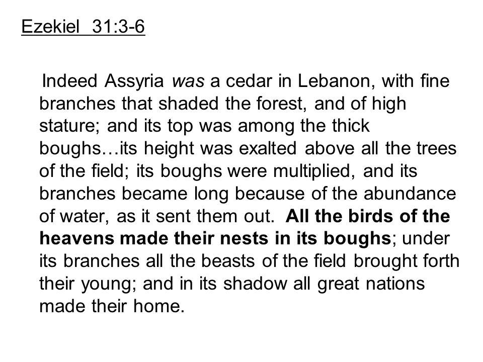 Ezekiel 31:3-6